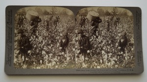 stereoview cotton1