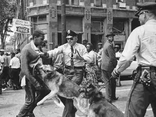 birmingham-police-dogs